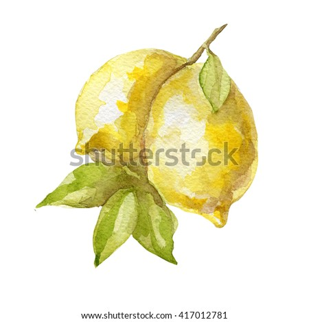 Watercolor hand drawn lemon fruit on white background. - stock photo