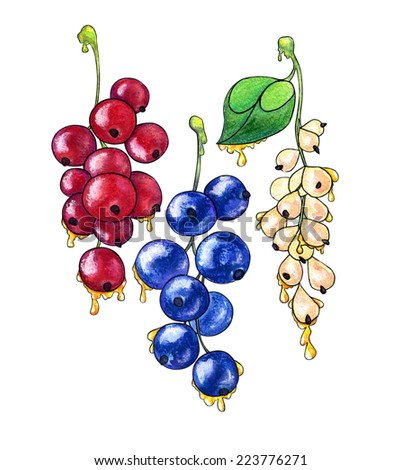 Watercolor hand drawn stylized black, white and red currants with flowing honey. - stock photo