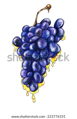 Watercolor hand drawn stylized grape bunch with flowing honey. - stock photo