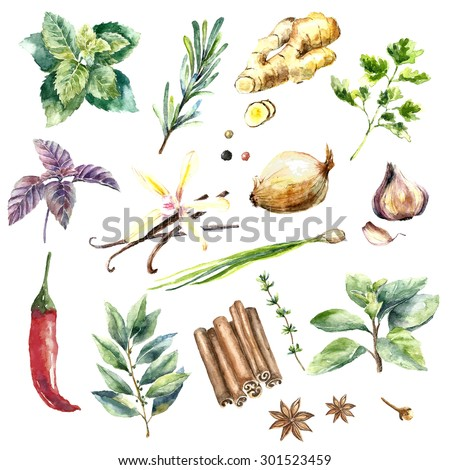 Watercolor herbs and spices set.Hand painted food objects: mint,basil,rosemary,parsley,oregano,thyme,bay leaves,green onion,ginger,pepper,vanilla.Hand draw illustration.Kitchen herbs and spices banner - stock photo