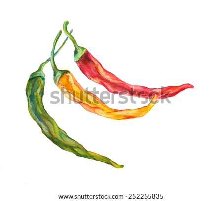 Watercolor, hot red, green, yellow chili peppers isolated on white background. - stock photo