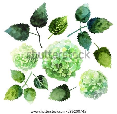 Watercolor hydrangea set isolated on white background - stock photo
