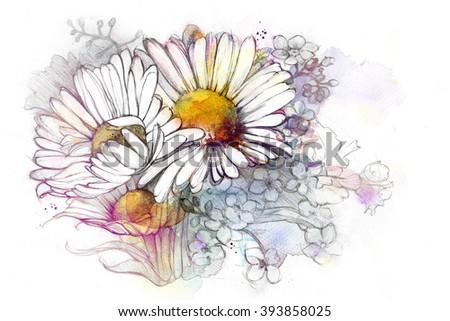 Watercolor illustration - Chamomile, daisy, isolated on white background - stock photo
