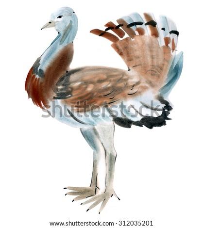 Watercolor illustration of a bird bustard - stock photo