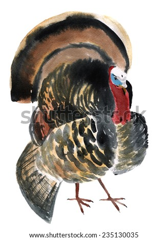 Watercolor illustration of a bird gobbler - stock photo