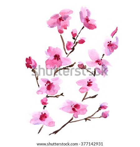 Watercolor illustration of a branch of cherry blossoms