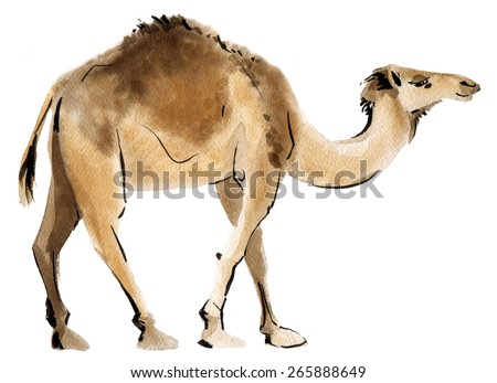 Watercolor illustration of a camel