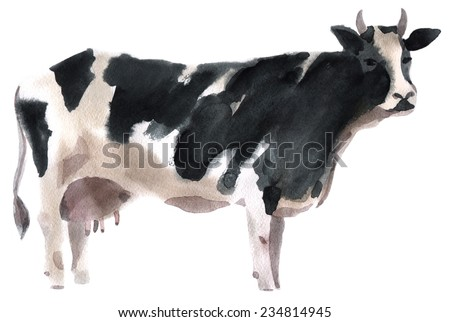 Watercolor illustration of a cow