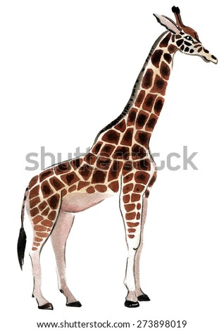 Watercolor illustration of a giraffe