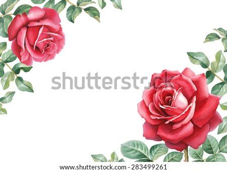 Watercolor illustration of a rose flower. Perfect for greeting card or invitation  - stock photo