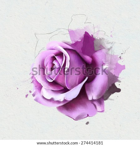 watercolor illustration of beautiful purple roses, isolated on a white background, with elements of the sketch - stock photo