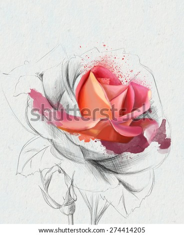 watercolor illustration of beautiful  roses, isolated on a white background, with elements of the sketch - stock photo