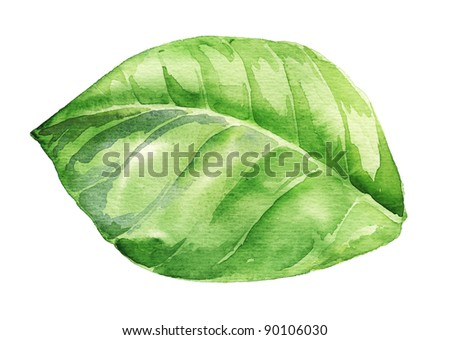Watercolor illustration of green leaf isolated on white - stock photo
