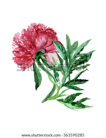 Watercolor illustration of peony flower isolated on a white. Realistic watercolor painting. Hand drawn illustration leaf and petal of flowers. - stock photo