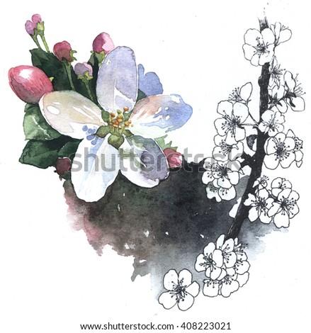 Watercolor illustration of springtime blossom cherry - stock photo