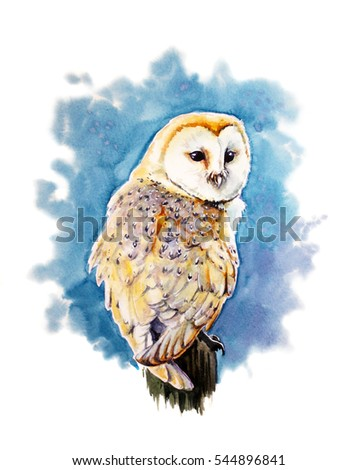 watercolor illustration of the barn owl
