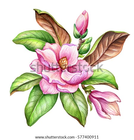Magnolia Stock Images, Royalty-Free Images & Vectors | Shutterstock