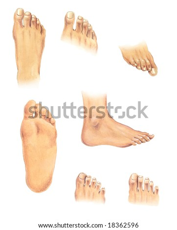 Watercolor illustration: set of human feet in different positions - stock photo