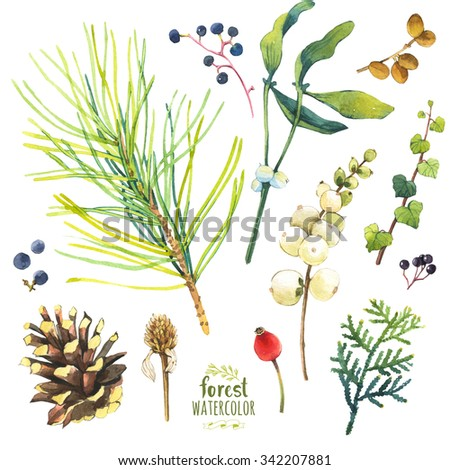 Watercolor illustration with branches, cone and berries. Set of winter and autumn forest plants. Collection of herbarium garden - stock photo