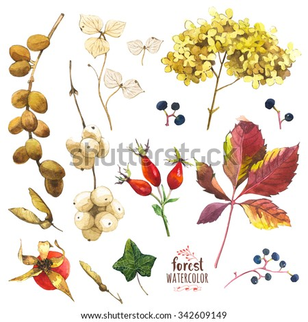 Watercolor illustration with branches, leaves and berries. Illustration with branches, leaves and berries. Watercolor set of winter and autumn forest plants. Collection of herbarium garden. - stock photo