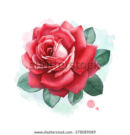 Watercolor illustrations of a rose flowers. Perfect for greeting cards or invitations