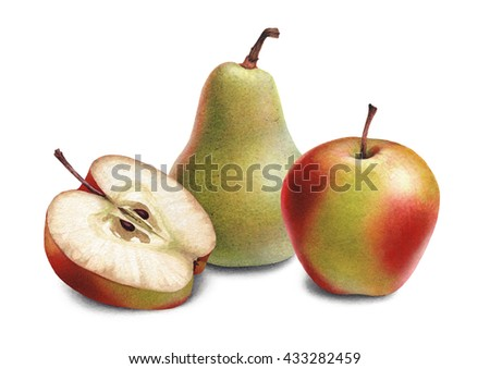 Watercolor illustrations of apples and pears. - stock photo