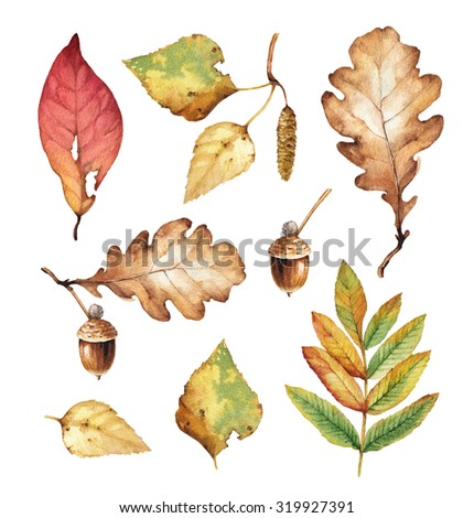 Watercolor illustrations of leaves - stock photo