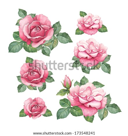 Watercolor illustrations of rose flowers  - stock photo