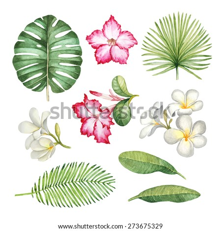 Watercolor illustrations of tropical flora - stock photo