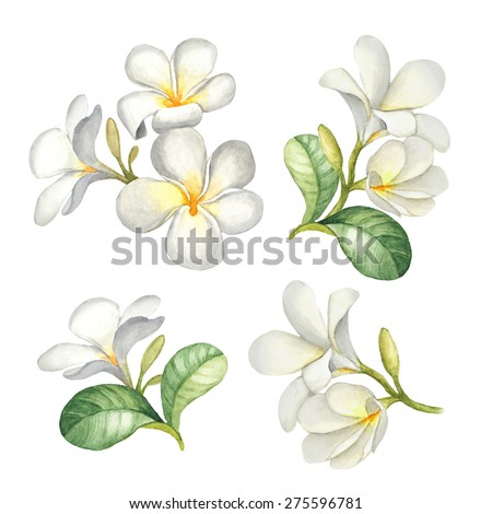 Watercolor illustrations of tropical flowers - stock photo