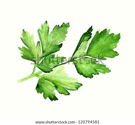 Leaves Painting Images Watercolor Image of Leaves of