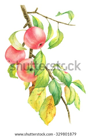 Watercolor image with a  branch and three red apples - stock photo