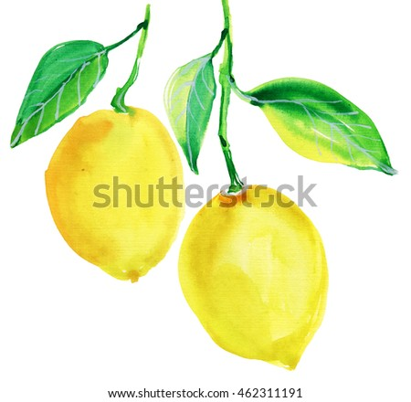 Watercolor Lemons. Painting.