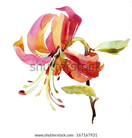 Watercolor lilly flower - stock photo