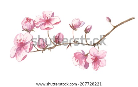 Watercolor little pink cherry branch and flowers set handmade and colorful - stock photo