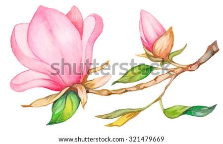 Watercolor magnolia. Raster illustration. - stock photo