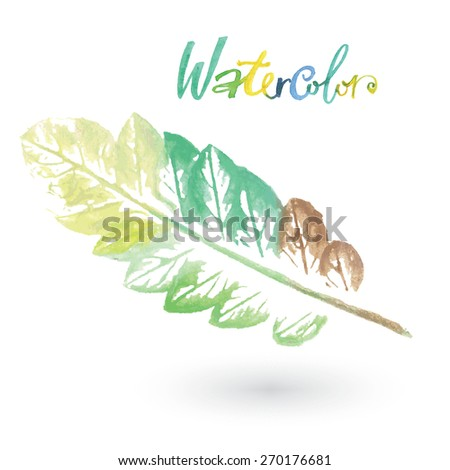 Watercolor natural leaf made in the original technique. Eco logo, creative work. Isolated object on a white background. Painted by hand.  - stock photo