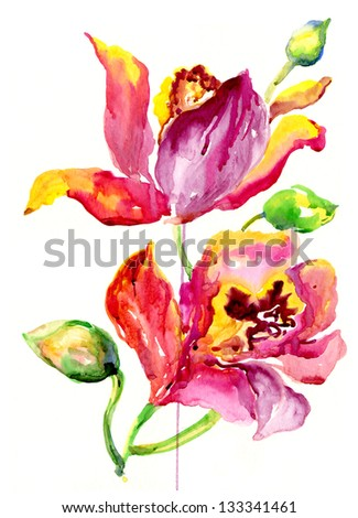 watercolor orchids - stock photo