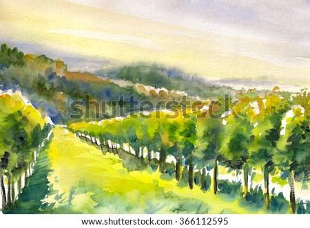 Watercolor painted illustration of Styrian Tuscany Vineyard ,Austria  - stock photo