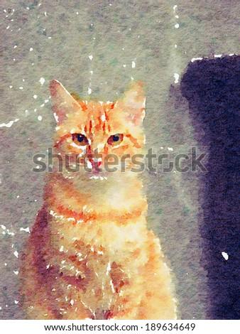 Watercolor painting illustration : cat / kitten - stock photo