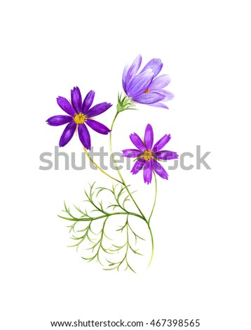 Watercolor painting of a cosmos flower branch with three flowers