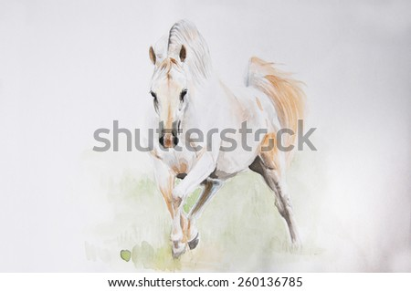 watercolor painting of andalusian horse portrait - stock photo