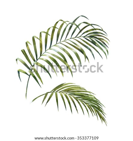 watercolor painting of coconut palm leaves isolated on white. - stock photo