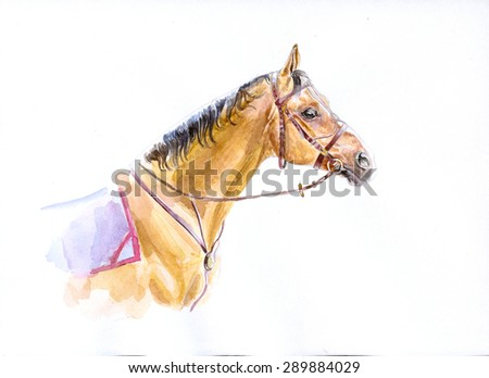 watercolor painting of don horse portrait - stock photo