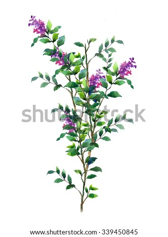 Watercolor painting of violet flower and green leaves on white background - stock photo