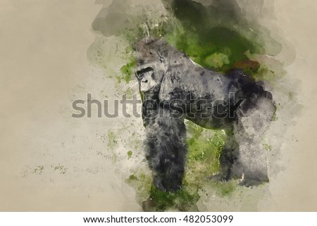 Watercolor painting of Western Lowland Gorilla in captivity