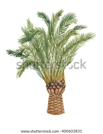 Watercolor painting palm tree isolated on white background - stock photo