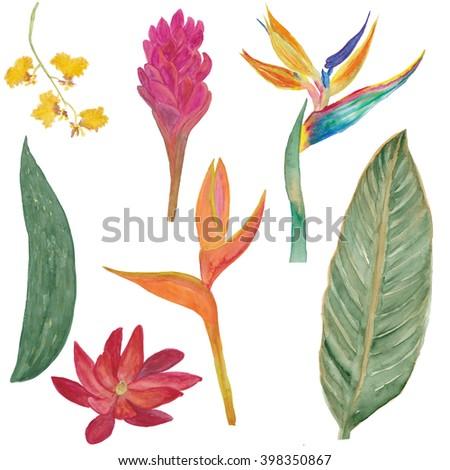 Watercolor Painting Set Tropical Flowers Orhidbird Stock