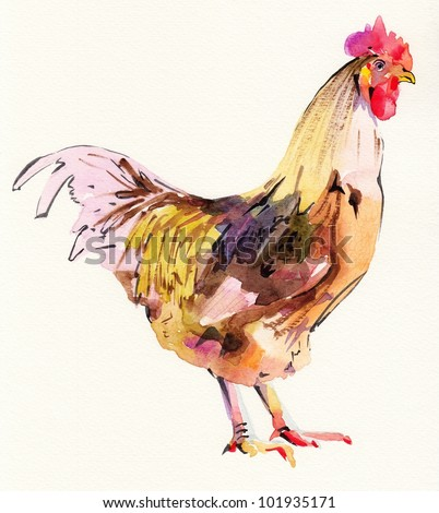 watercolor painting sketch cock. I am author of this illustration - stock photo