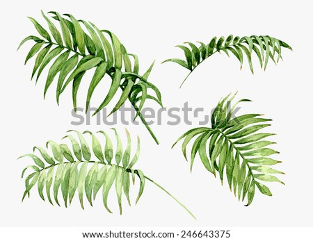Watercolor palm leaves isolated on white. - stock photo